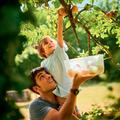 Tupperware KlimaOase 4,4 l hält Obst und Gemüse aus dem Garten länger frisch