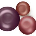 Tupperware Allegra Metallic 800 ml Schüsseln mit tollen Metallic Farben